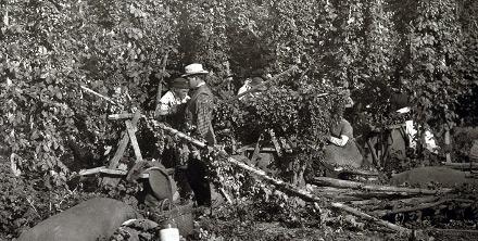 Hop picking in Kent, 1875.