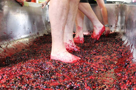 Cherries being squashed by feet at St Austell.