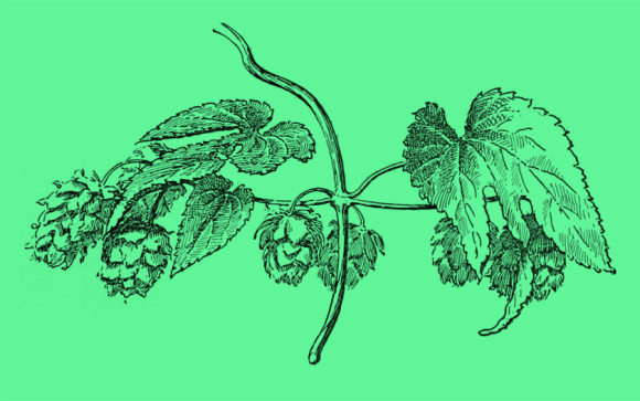 Hops against green.