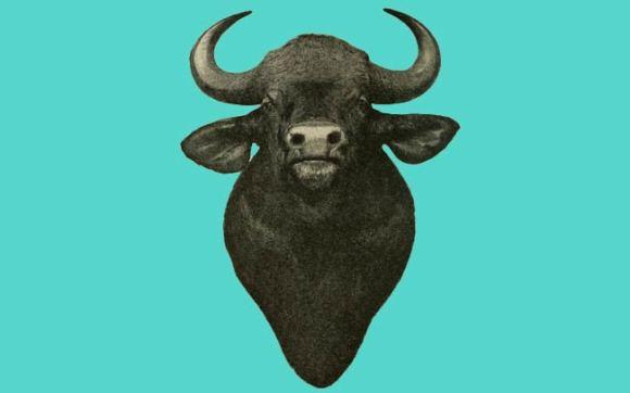 An ox.