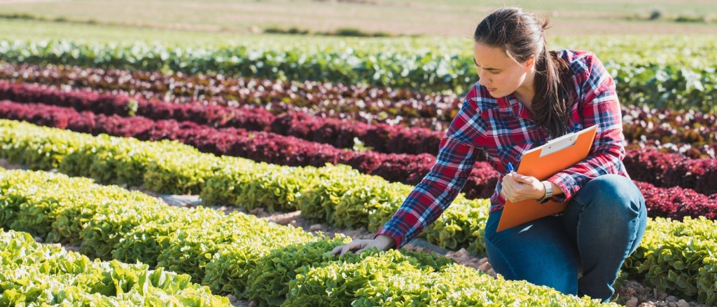 young technical woman working in a field of lettuces with a folder