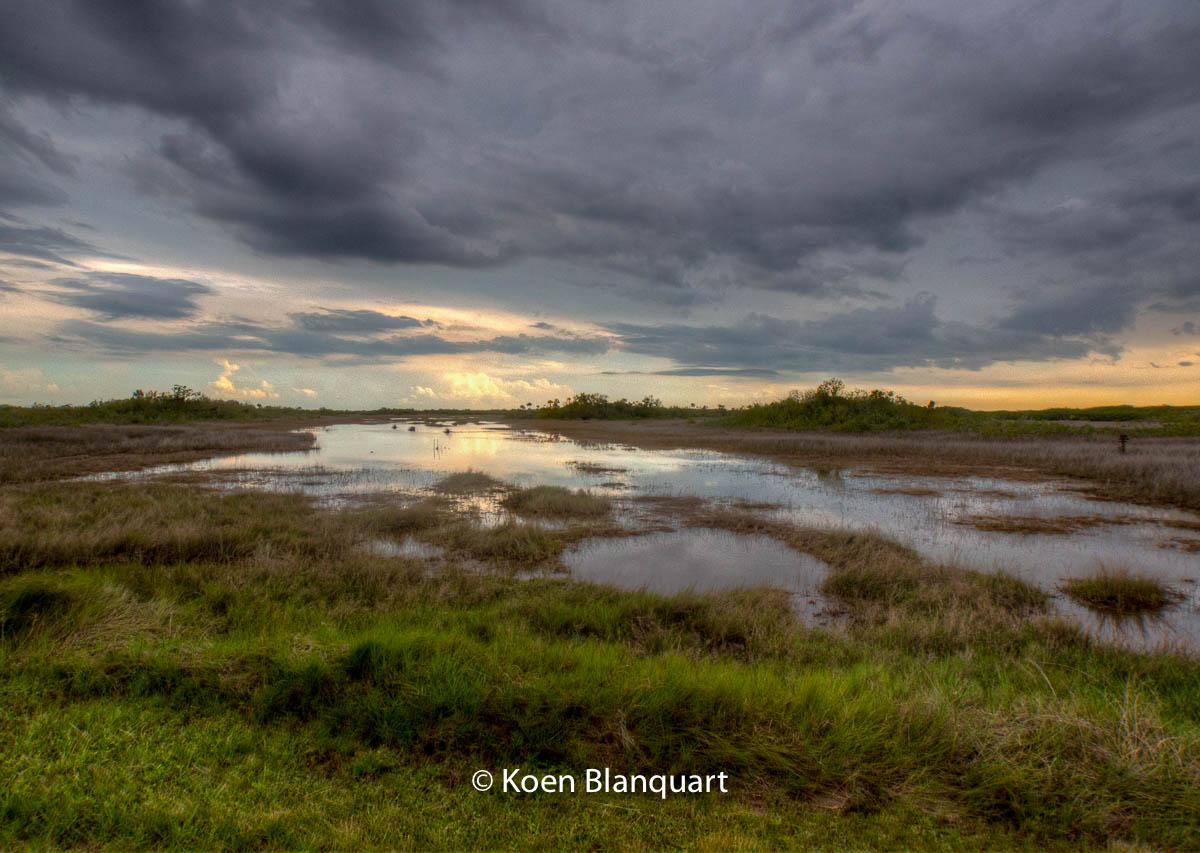The Everglades
