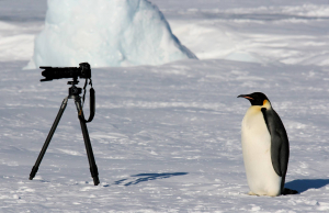 Penguin on Antarctica (Image by Martha de Jong-Lantink - used with permission)