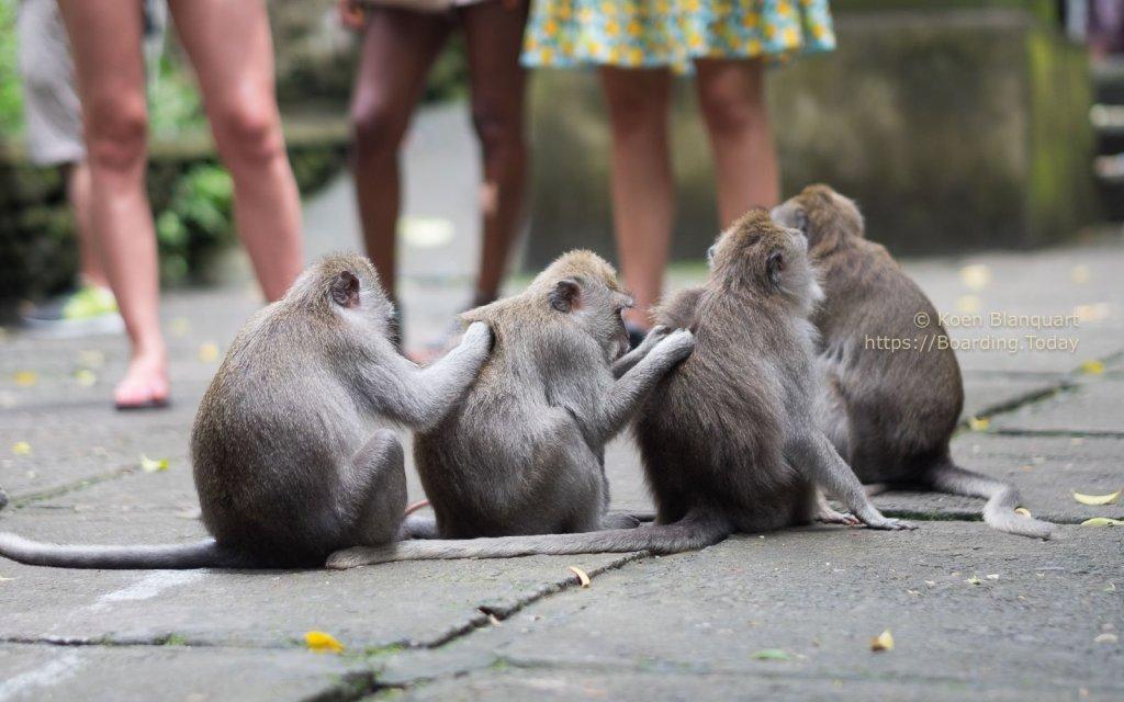 Monkeys in the sacred Monkey Forest Sanctuary in Ubud, Bali, Indonesia