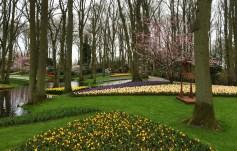 Beautifully manicured flower beds at Keukenhof