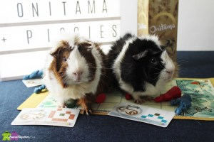 Onitama guinea pig custom made cards