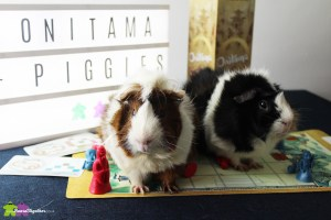 Guinea Pigs with boardgame Onitama