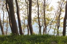 sønderborg denmark trees view water coast grass sky