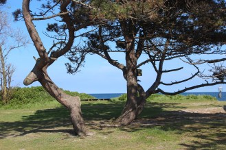 schleimuende germany water sky blue trees