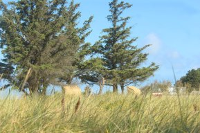 marina schleimuende germany trees