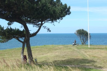 hundested seeland denmark coast tree