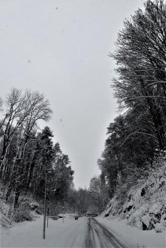 img_1535-2