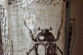 Hotel oddity: bugs in hotel room