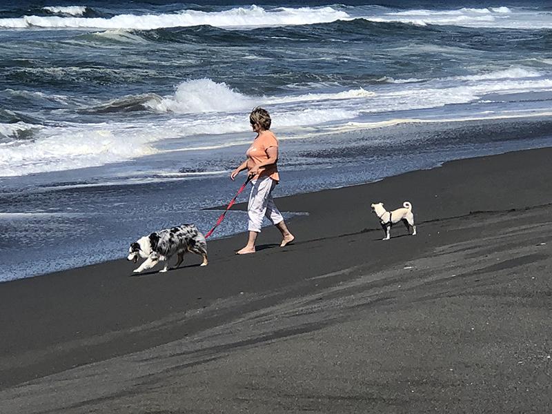 Carolyn walking the pups
