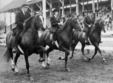 Bramble hollow equestrian centre river oak saddlery club
