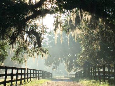 lane-daytime-mist