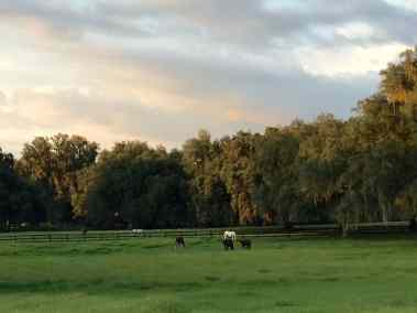 pasture-five-horses-grazing