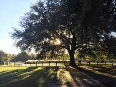 pasture-foals