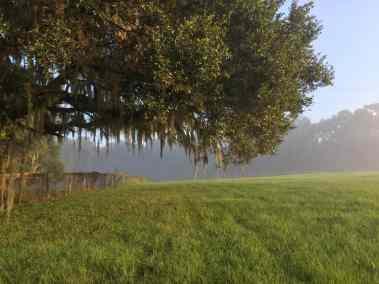 pasture-fresh-mowed-tree