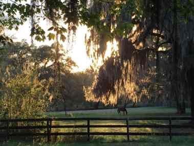pasture-horse-late-day