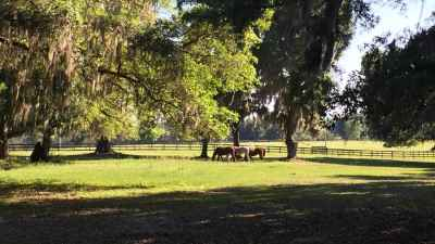 pasture-threehorses-trees