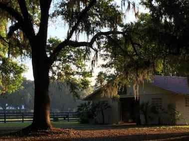 small-barn-side-tree