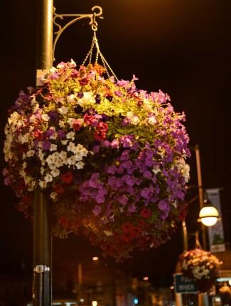 St. Charles - Streetlight and flowers © Bobbi Rose Photography
