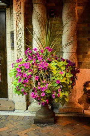 St. Charles - Hotel Baker potted plant © Bobbi Rose Photography