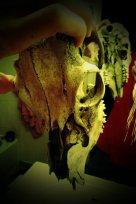 My deer skull.
