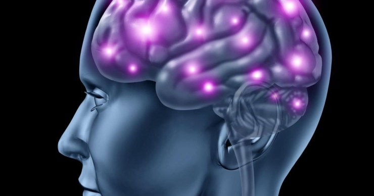 Brain-Man-Model
