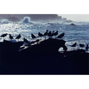Birds on Rock, San Miguel Island