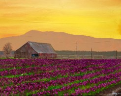 """Valley Sunrise in Bloom"": 20"" x 16"" acrylic original - $375"