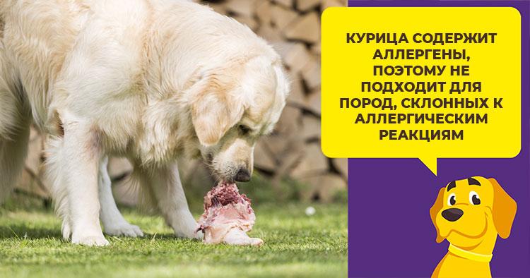 Какое мясо можно давать взрослой собаке или щенку