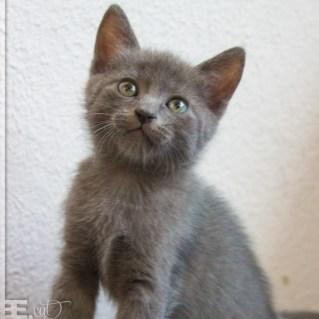 pisici_mici_05