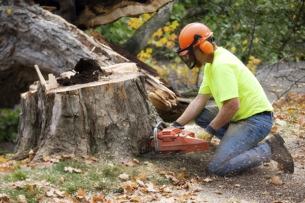 Image result for Tree Service Company istock