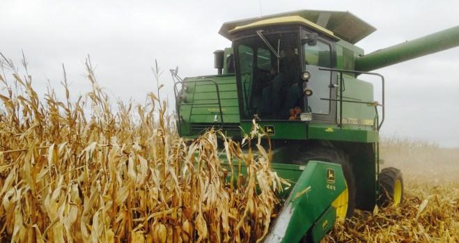 Combine in harvest