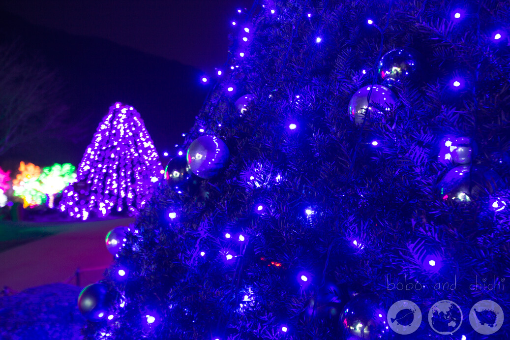 Lighting Festival Seoul Cheongpyong Garden of Morning Calm Blue Tree