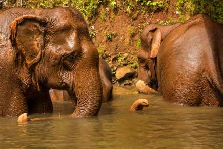 Bath-Time-for-Elephants
