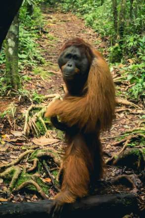 Borneo_-139