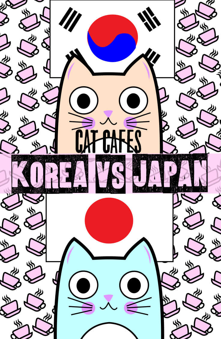 cat cafes korea vs japan