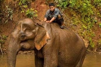 Mahout-on-Elephant-Back-in-River