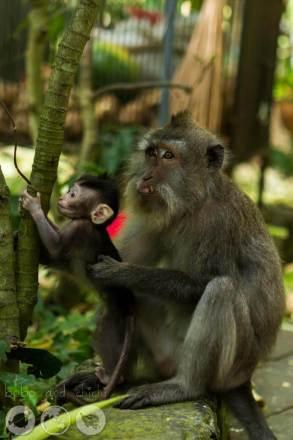 Teaching Monkey to Climb