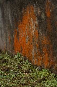 Orange-Spot-on-Wall-with-Grass