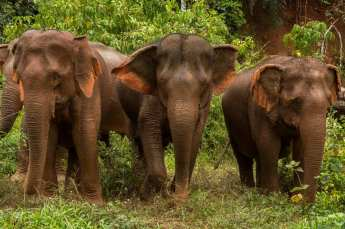 Three-Elephant-Pals