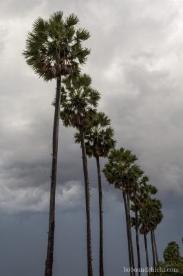 Trees-in-the-storm