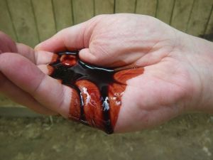 This 'blood' is sap tapped from rainforest trees.