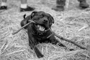 This black dog alleviates depression