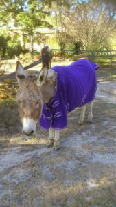 Eeyore's winter onesie