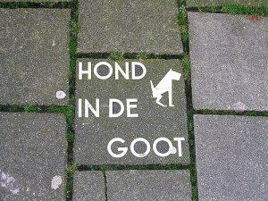 dog-doo-afternoon