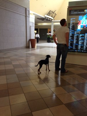 Dog in town center mall